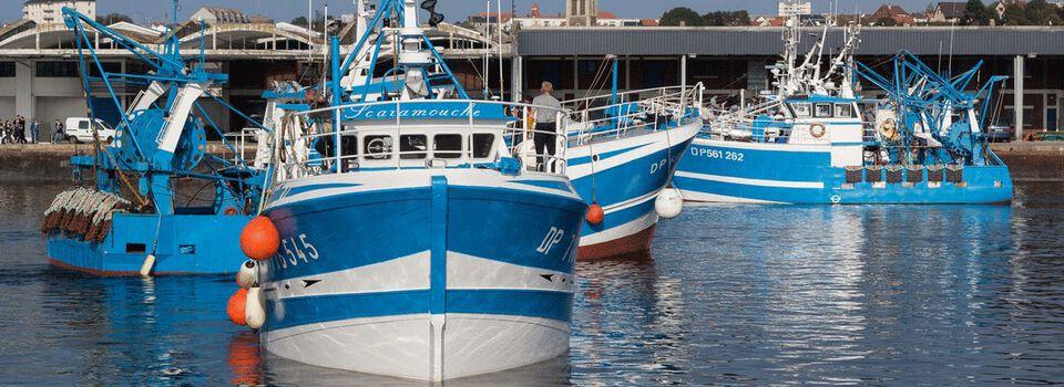 Pêche française Picard : un poisson notamment issu d'une pêche durable