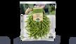 Haricots verts en conversion vers le bio, France