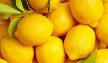 Sorbet Le citron