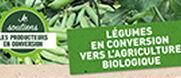 Les légumes en conversion vers l'agriculture biologique, un pari sur l'avenir